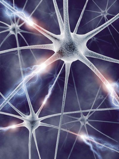 Nervový systém - anatomie
