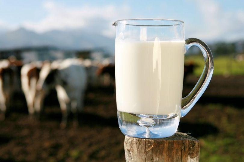 Stravitelnost mléka?