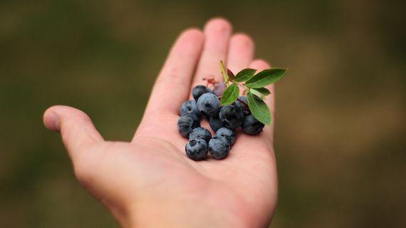 Lesné plody: v čom sú pre naše telo výnimočné?